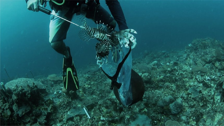 The Lionfish Invasion