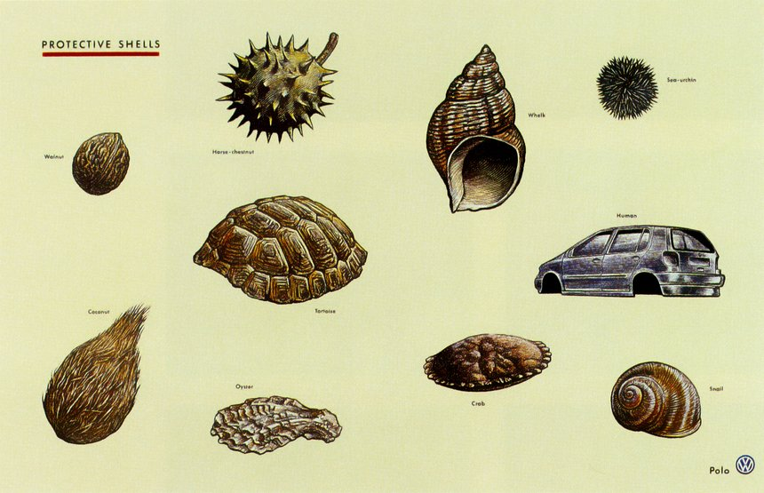 Fighter / Shells / Species