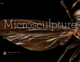 Microsculpture – The insect portraits of Levon Biss